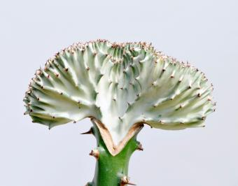 https://cf.ltkcdn.net/garden/images/slide/176055-783x613-Euphorbia.jpg