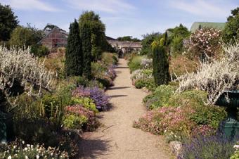 Edible Landscape Ideas