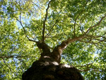 Guide to Maintaining Trees