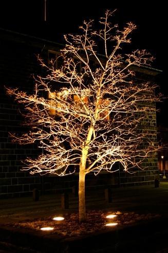 lighting for specimen tree