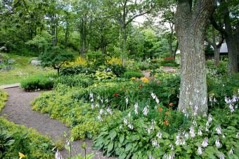 How to Choose What Trees to Plant