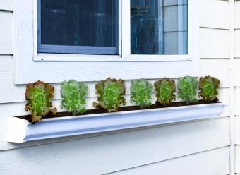 salad rain gutter garden