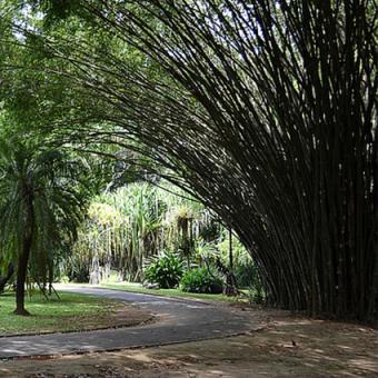 cascading bamboo