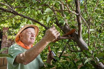 Man pruning trees