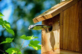 bird leaving its house