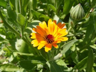 Best Seeds for Easy Summer Plants