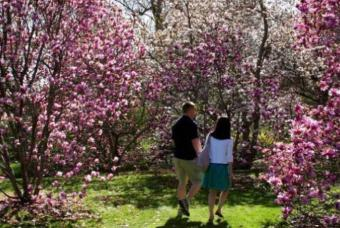 walking in the magnolia trees