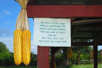 no pesticides