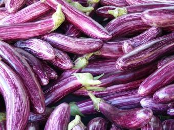 eggplant cultivar