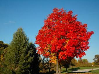 Brilliant-Fall-Foliage.jpg