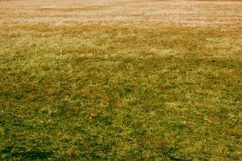 Can You Regrow a Dead Lawn?