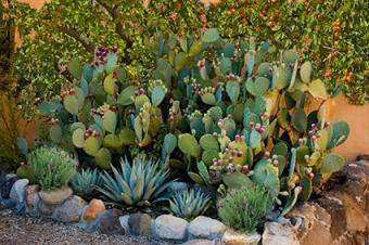Desert garden with edibles