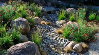 Desert rock garden
