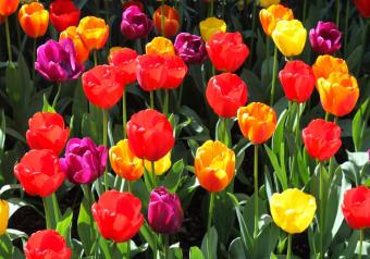 Pictures of Seasonal Spring Flowers