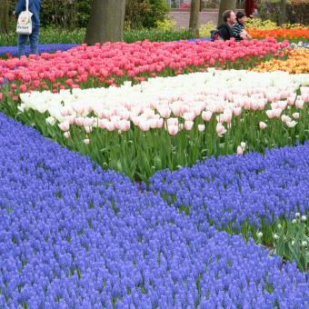 https://cf.ltkcdn.net/garden/images/slide/195363-850x850-blue-flowers-in-garden.jpg