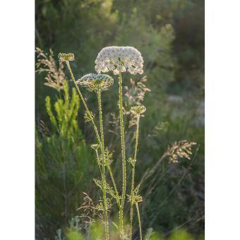 https://cf.ltkcdn.net/garden/images/slide/200047-668x668-Wild-carrot.jpg