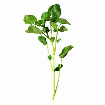 https://cf.ltkcdn.net/garden/images/slide/200050-668x668-Watercress-weed.jpg