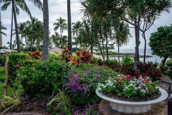 https://cf.ltkcdn.net/garden/images/slide/201558-850x567--Tropical-flower-garden.jpg