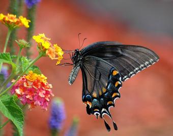 Where Do Butterflies Live?