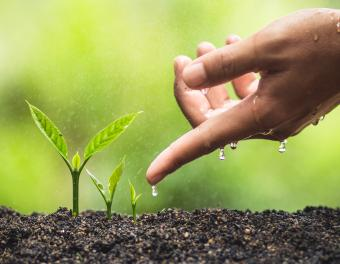 Cropped hand watering 3 seedlings