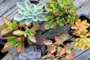 closer view of succulents