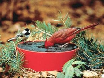 Happy Bird Solar Sipper Heated Bird Bath