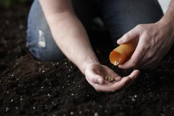 Sources for Free Vegetable Seeds