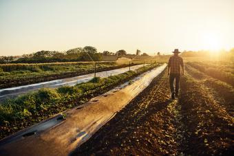 USDA Gardening Zone 8