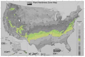 USDA Gardening Zone 7