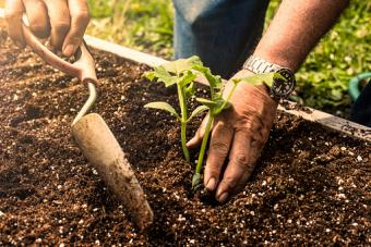 man using a trowel to plant