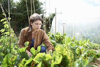 Woman caring for vegetables