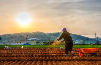 What Is in Gardening Fertilizers?