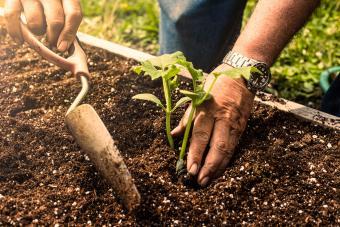 Best Soil for a Raised Bed Vegetable Garden