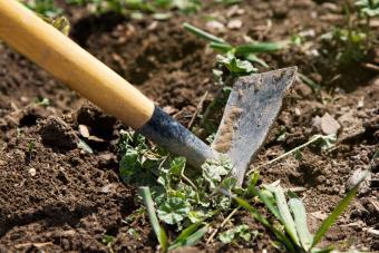 8 Proven Methods for Preventing Weeds in Your Garden