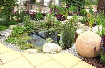 Unique Ideas for Water Garden Plants
