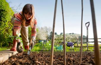 When Is It Too Late to Plant a Garden?