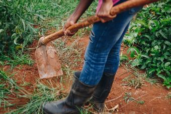 How to Amend Clay Soil: 4 Steps to Gardening Success