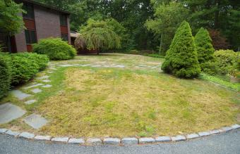 Burnt front lawn