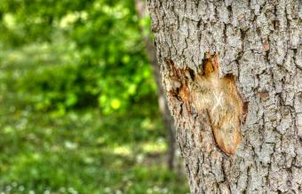 How to Save a Tree With Damaged Bark