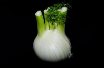 Herb fennel bulb