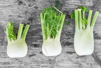 Three fennel bulbs in a row