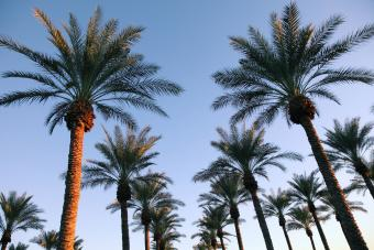 Group of palm tree in morning