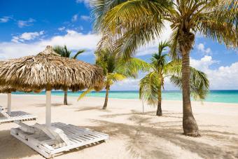 Palm trees near recliners on beach