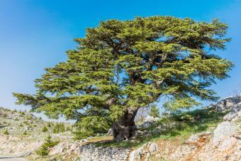 Nature Reserve Barouk Lebanon