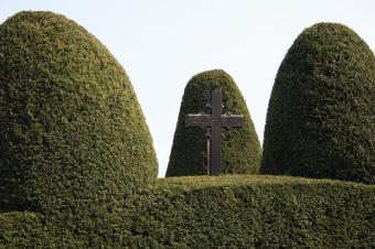 European Yew trees with cross
