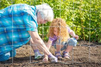 Girl & Grandma Planting Peas in Garden