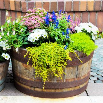 https://cf.ltkcdn.net/garden/images/slide/248521-850x850-flower-barril.jpg