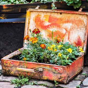https://cf.ltkcdn.net/garden/images/slide/248522-850x850-Suitcase-flowers.jpg