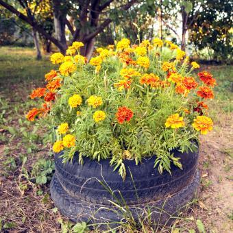 https://cf.ltkcdn.net/garden/images/slide/248546-850x850-tires-and-flowers.jpg