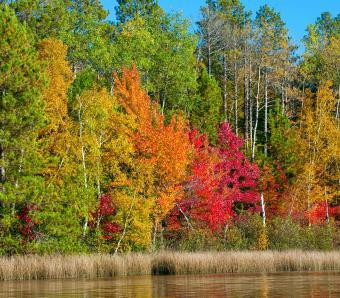 https://cf.ltkcdn.net/garden/images/slide/249576-850x744-3-tree-identification.jpg